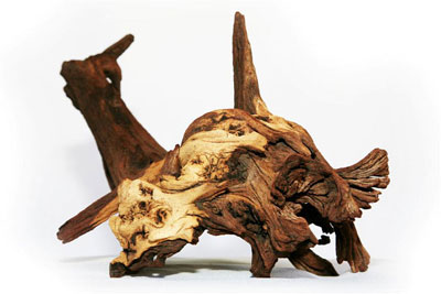 Mopane roots drifwood