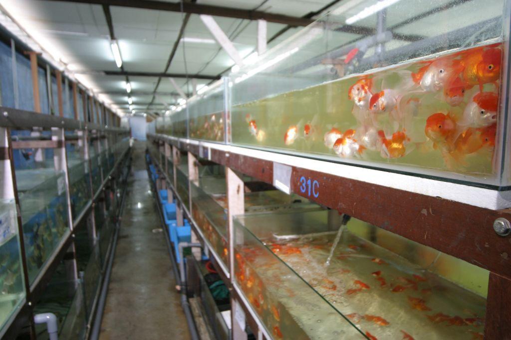 Aquarium ferm fish manufacturers suppliers fish catalog for Neighborhood fish farm