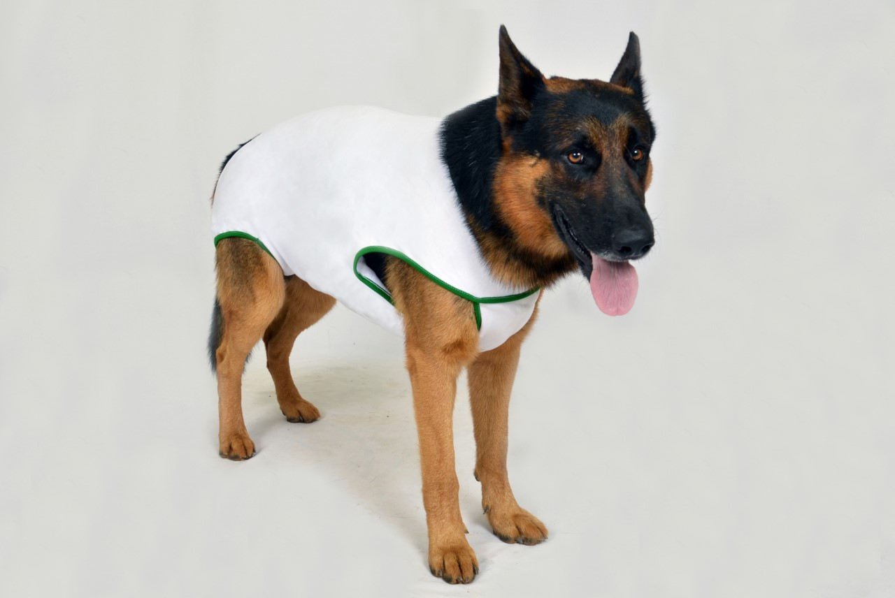 UNISSEX SURGICAL POST CLOTHING FOR DOGS