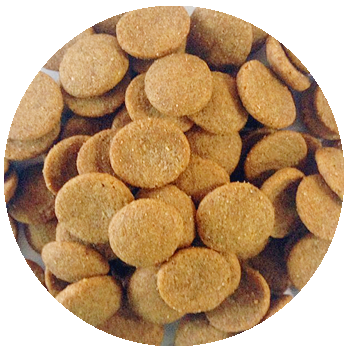 Manufacturing (OEM) Dog food