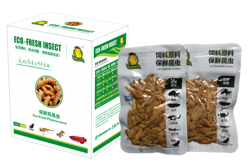 Eco Fresh Black Soldier Fly Larvae For Reptiles and Fishes