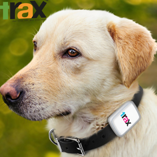 Trax GPS - the world抯 smallest & lightest, real-time GPS tracker for pets.